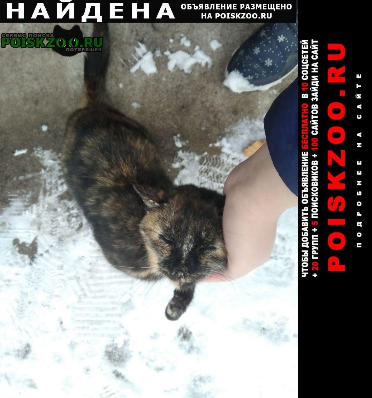 Найдена кошка в селе чесноковка Уфа