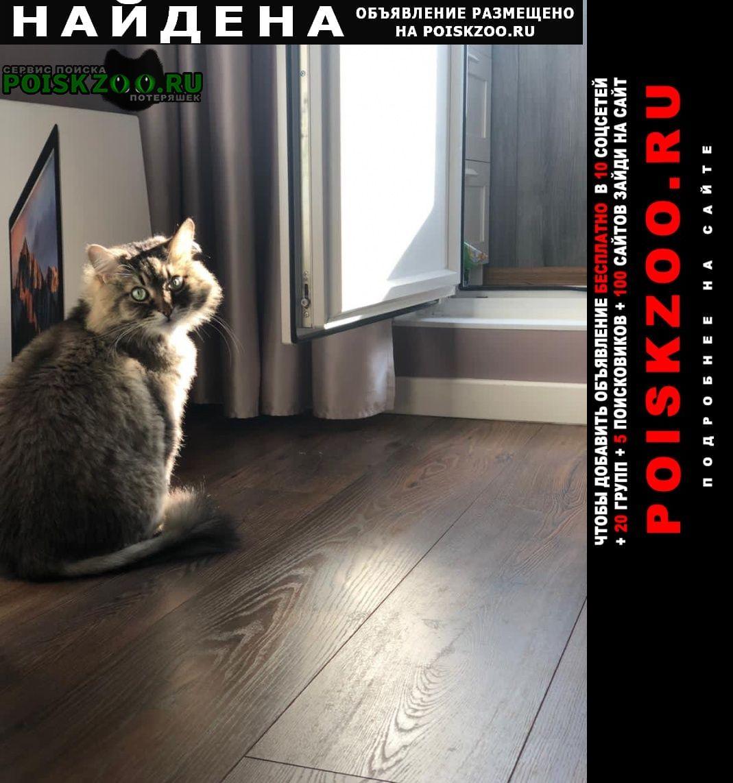 Найдена кошка ищем новых хозяев для кота Лобня