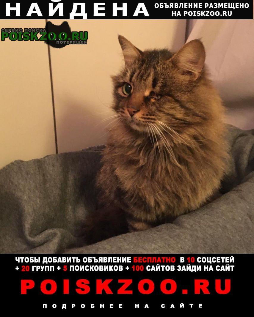 Найдена кошка с поврежденным глазом Москва