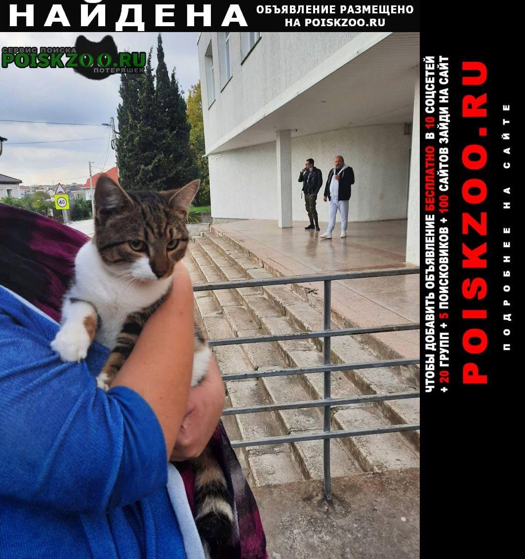 Найдена кошка. Севастополь