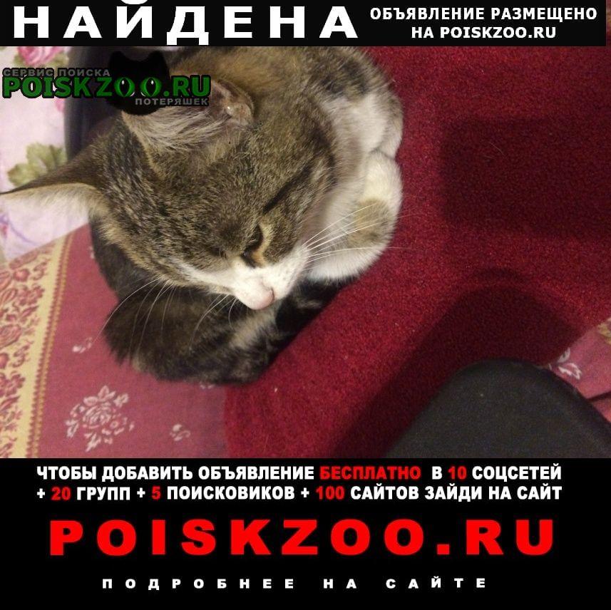 Найдена кошка кошечка Томилино