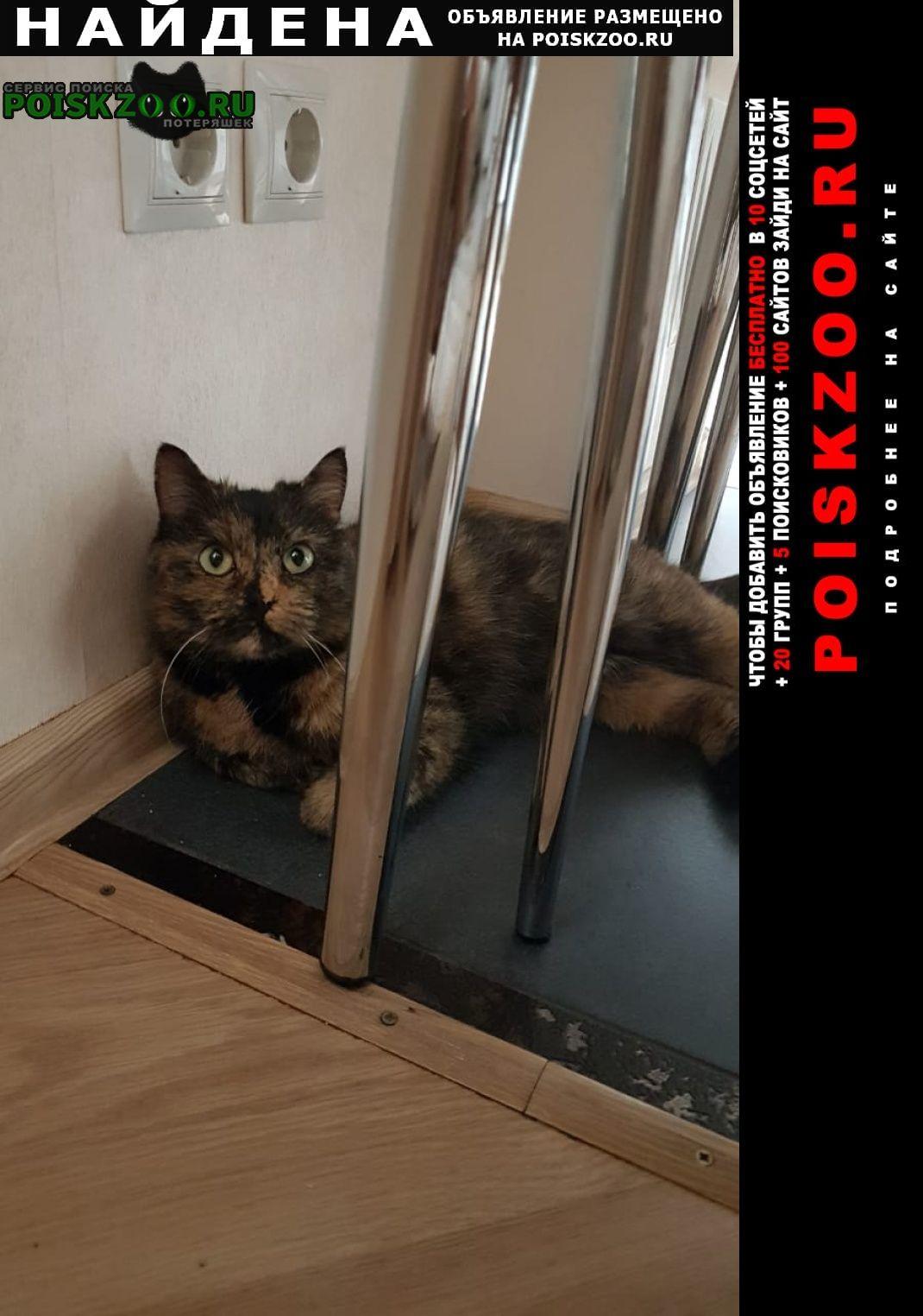 Найдена кошка   около3х лет. домашняя, Омск