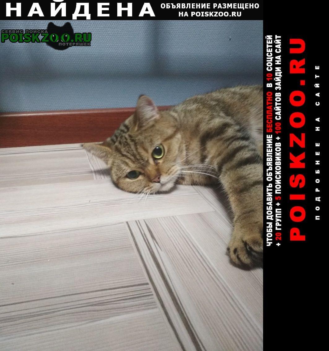 Найдена кошка в северном медведково Москва