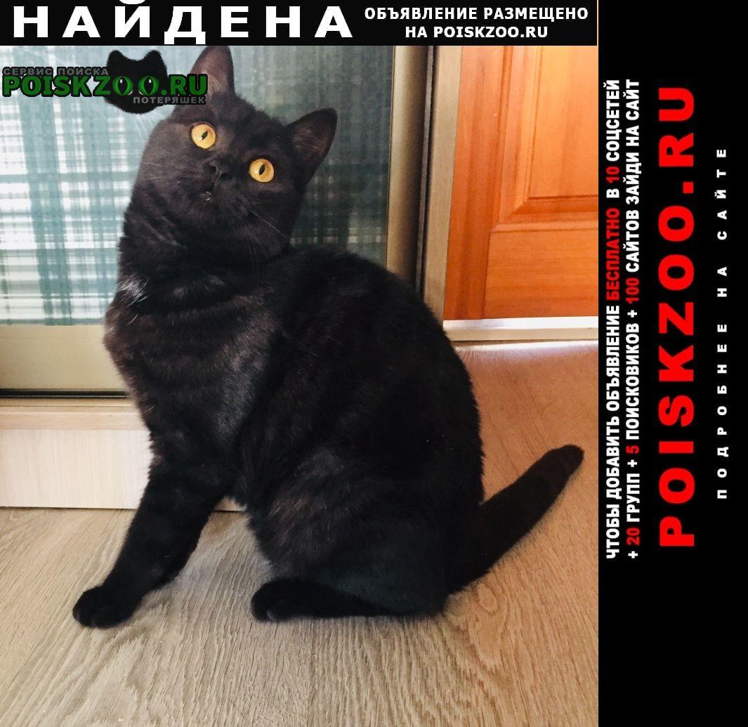 Найдена кошка похожа на шотландскую. Бийск