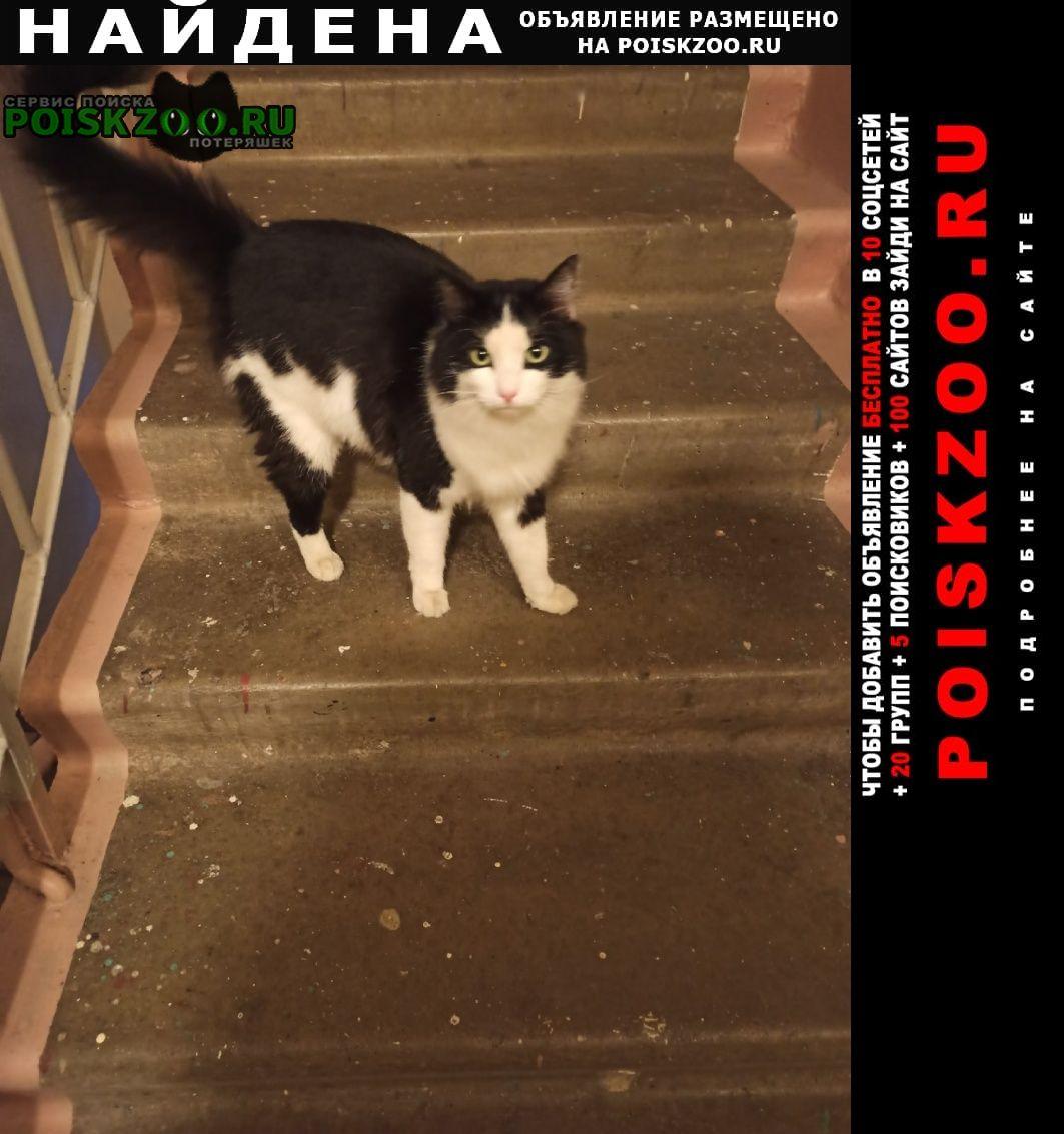 Найдена кошка жел-дор новая 40 ч б зеленые глаза Балашиха