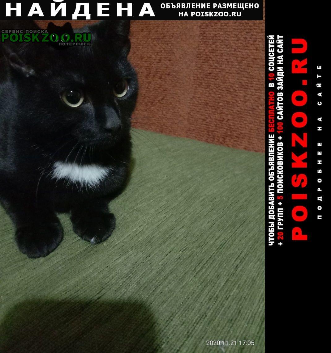 Найден кот Екатеринбург