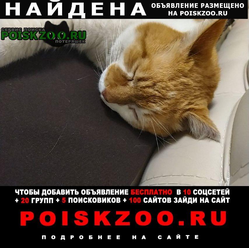 Найден кот рыжий Екатеринбург