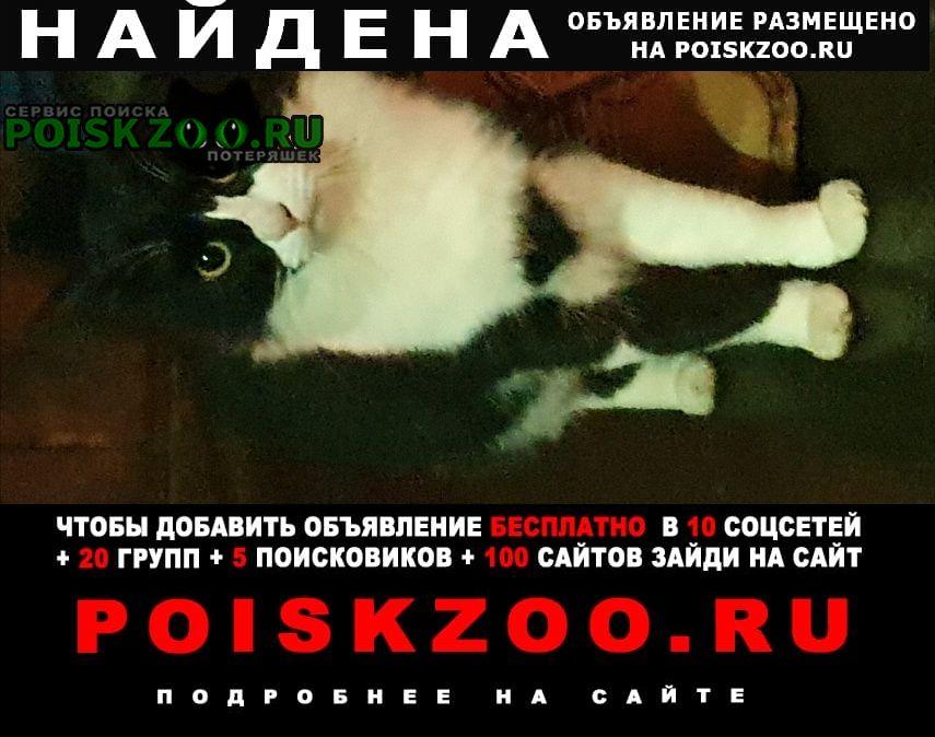 Найдена кошка кот( может и ) Жуковский