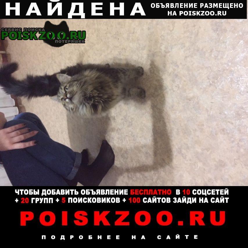 Найдена кошка в районе м-не степной, д.5 Старый Оскол