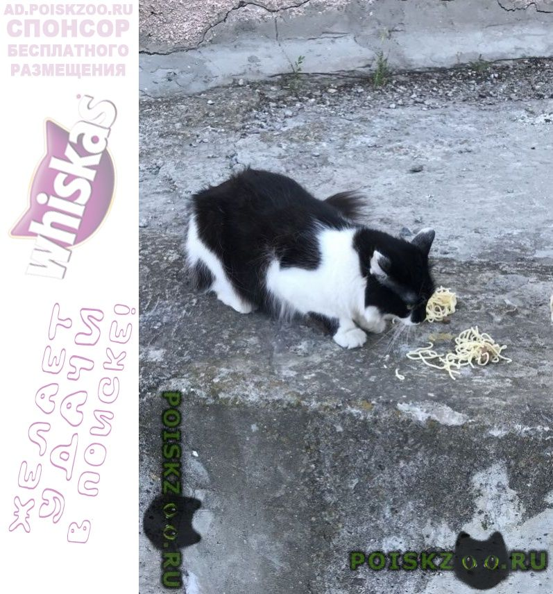 Найдена кошка г.Волгодонск