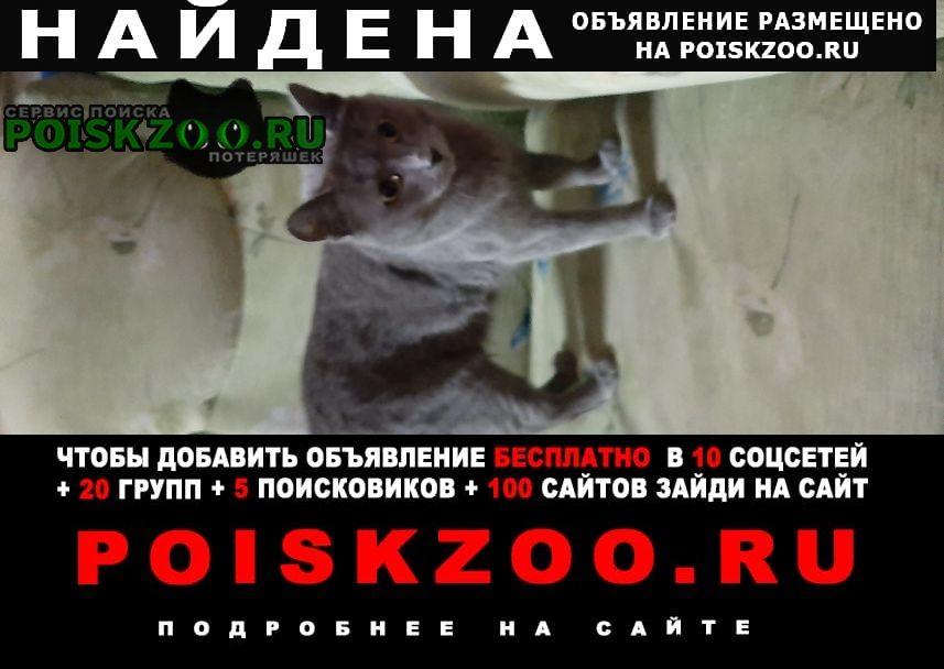 Найдена кошка сейчас находится в локомотивном депо сур Сургут