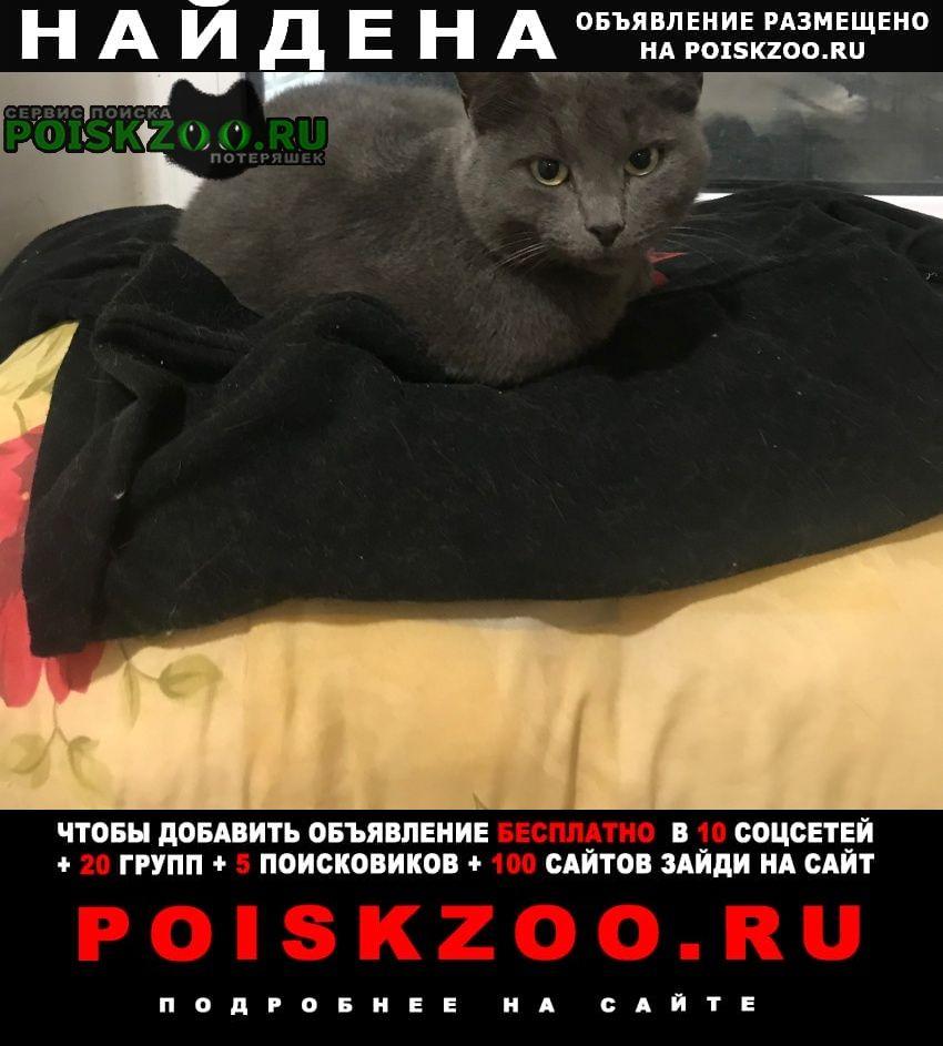 Найдена кошка Кострома
