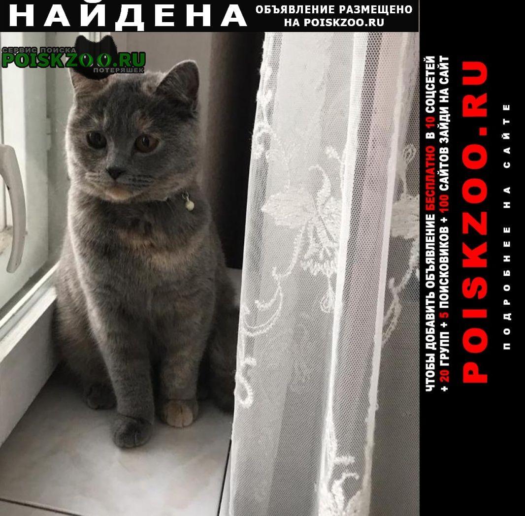 Найдена кошка южное бутово Москва