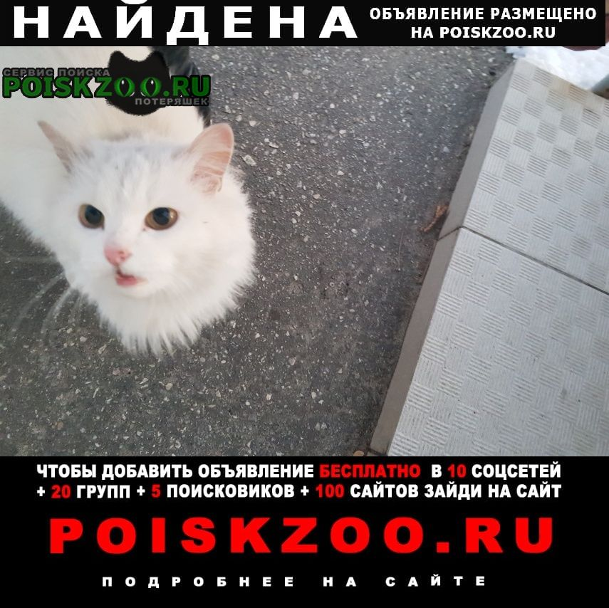 Найдена кошка или котик Кстово