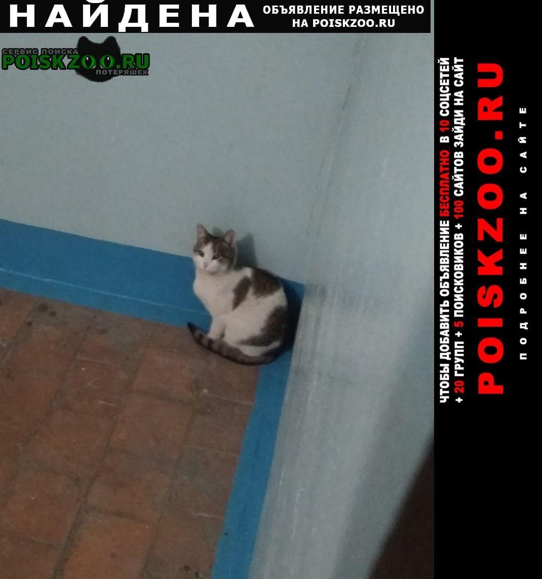 Найдена кошка /кот. возможно домашняя. нг Набережные Челны