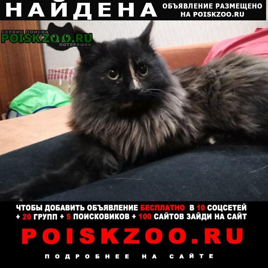 Найдена кошка Нижний Новгород