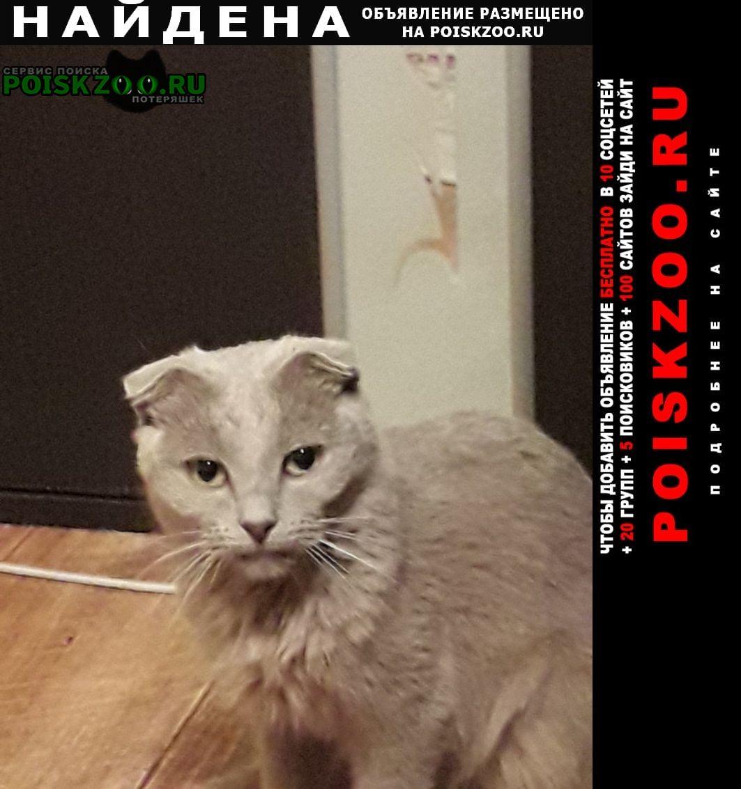 Найдена кошка маленькая рыженькая вислоушка Балашов
