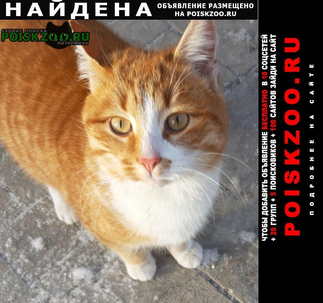 Найдена кошка Саратов
