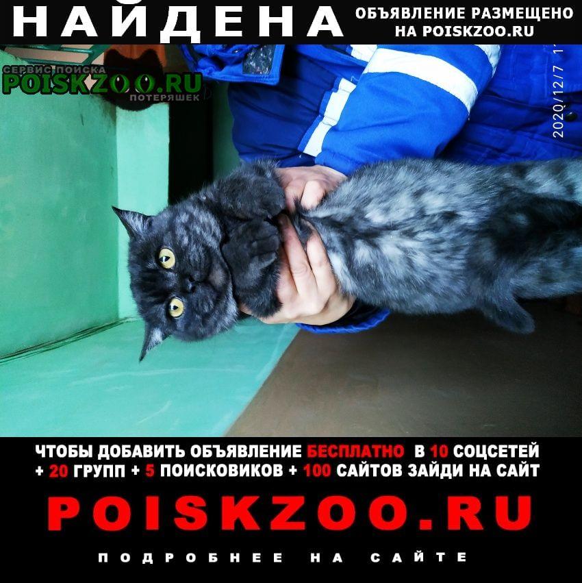 Найдена кошка темно серый окрас. Омск