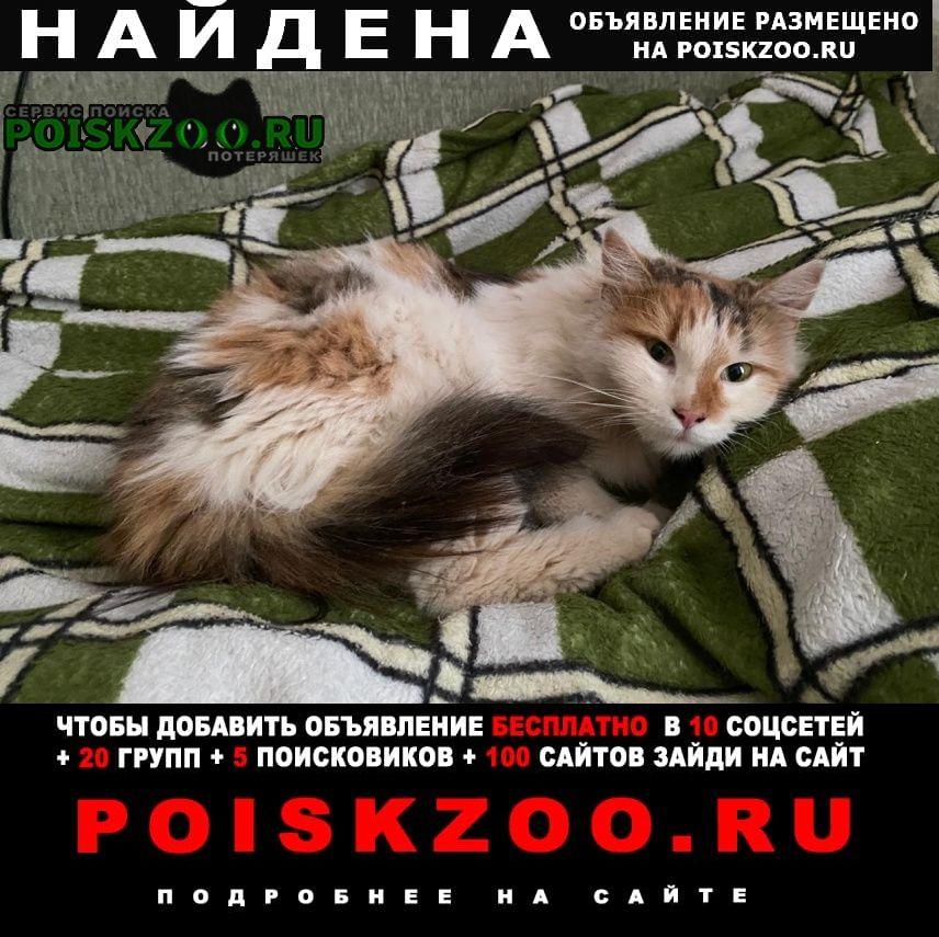 Найдена кошка Жуковский