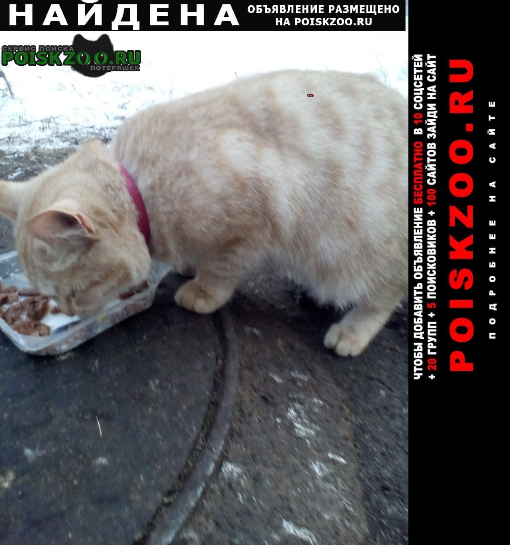 Найдена кошка рыжий кот, на ул.кувыкина Уфа