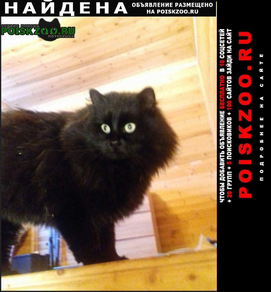 Найдена кошка кот бегемот ищет хозяев Тула