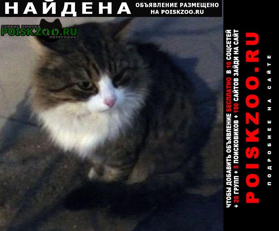 Найдена кошка Ижевск