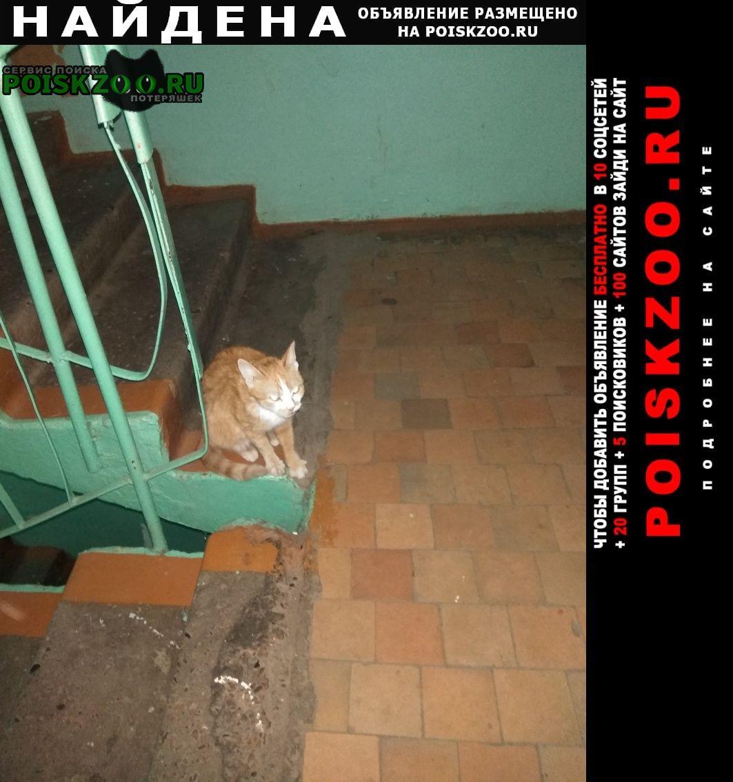 Найдена кошка Канск