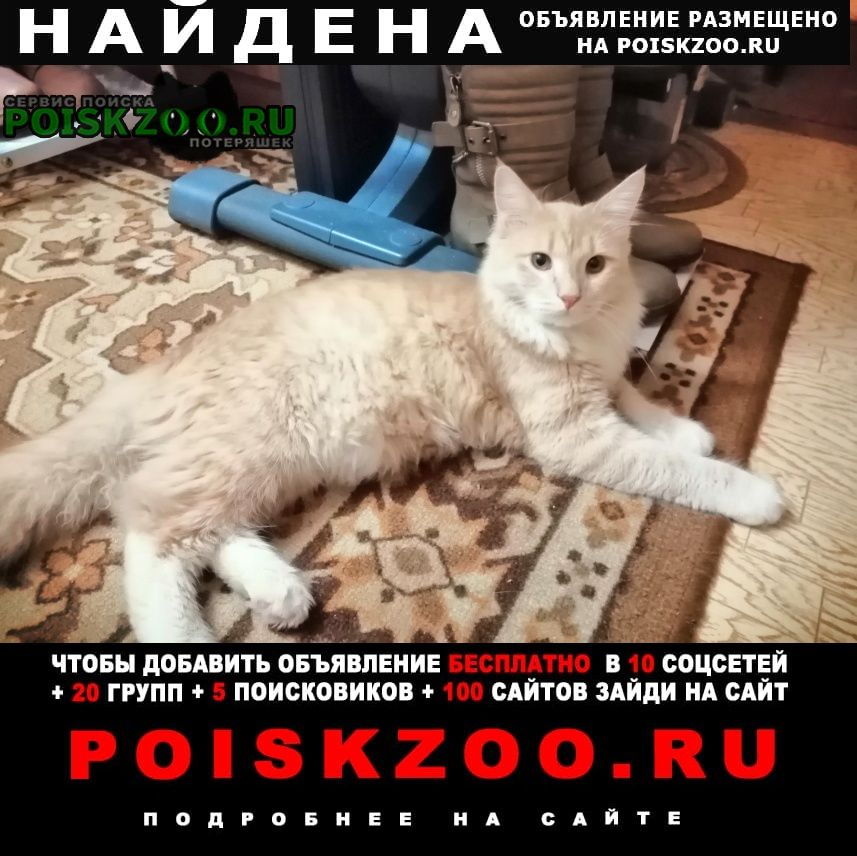 Найдена кошка Ульяновск