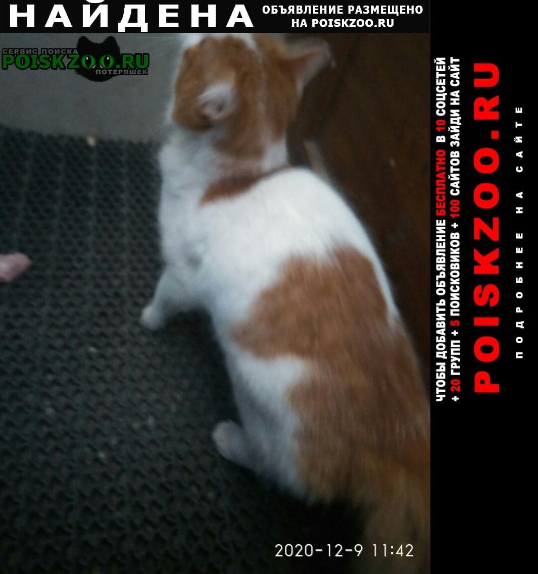 Найдена кошка бело-рыжий кот на садовой Санкт-Петербург