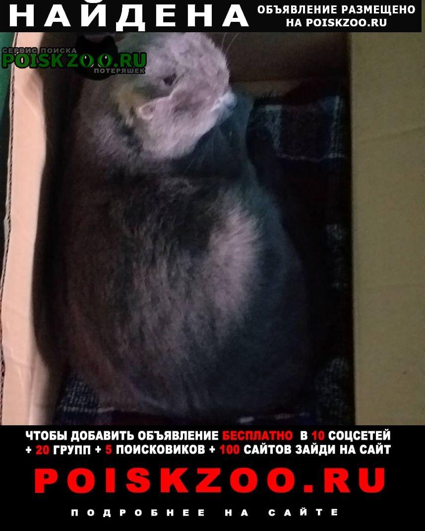 Найден кот британец Санкт-Петербург