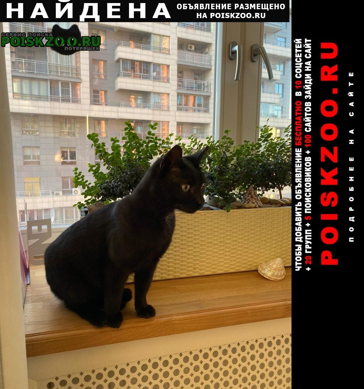 Найдена кошка кот, проспект маршала жукова Москва