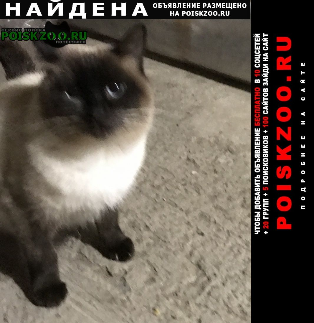 Найдена кошка в поселке 8 марта, Уфа
