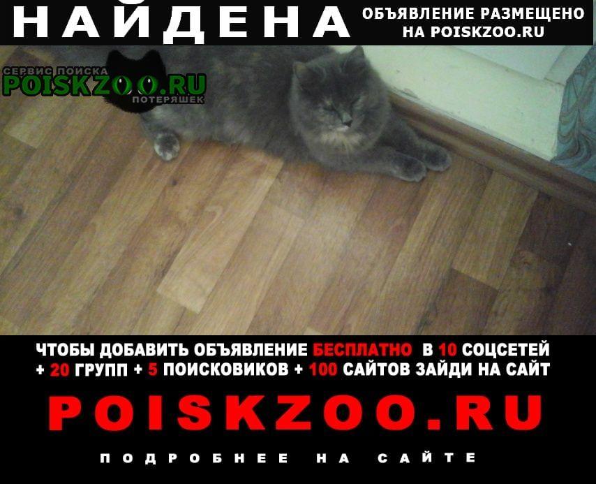 Найдена кошка вчера вечером Новороссийск
