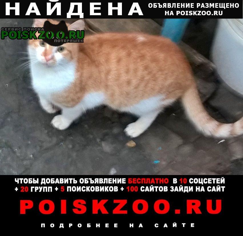 Найден кот прибился к дому Ростов-на-Дону