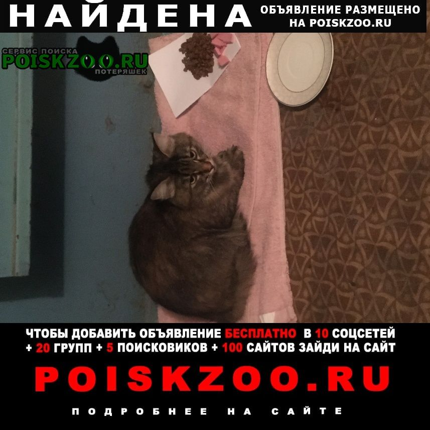 Найдена кошка хозяин я отзовись    Самара