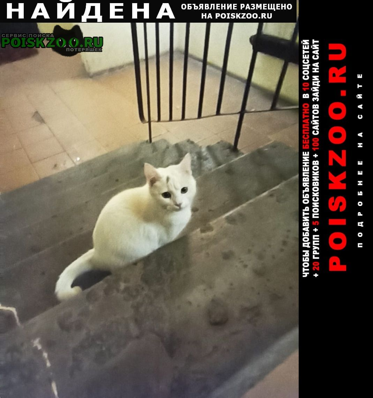 Найдена кошка Ступино