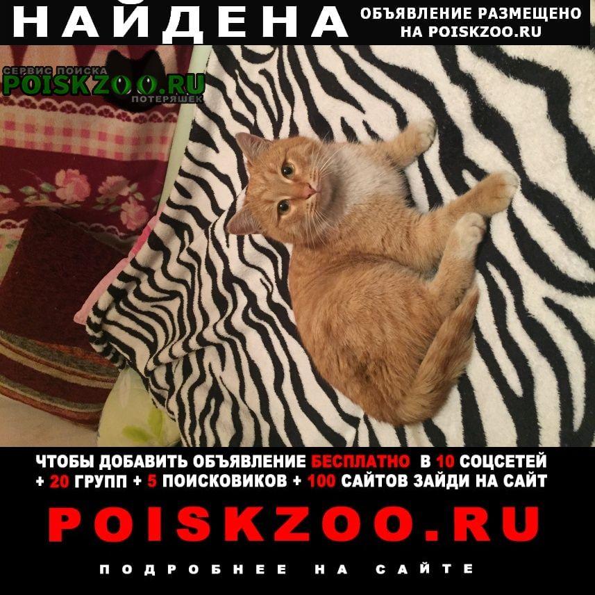 Найден кот рыжий ик Уфа