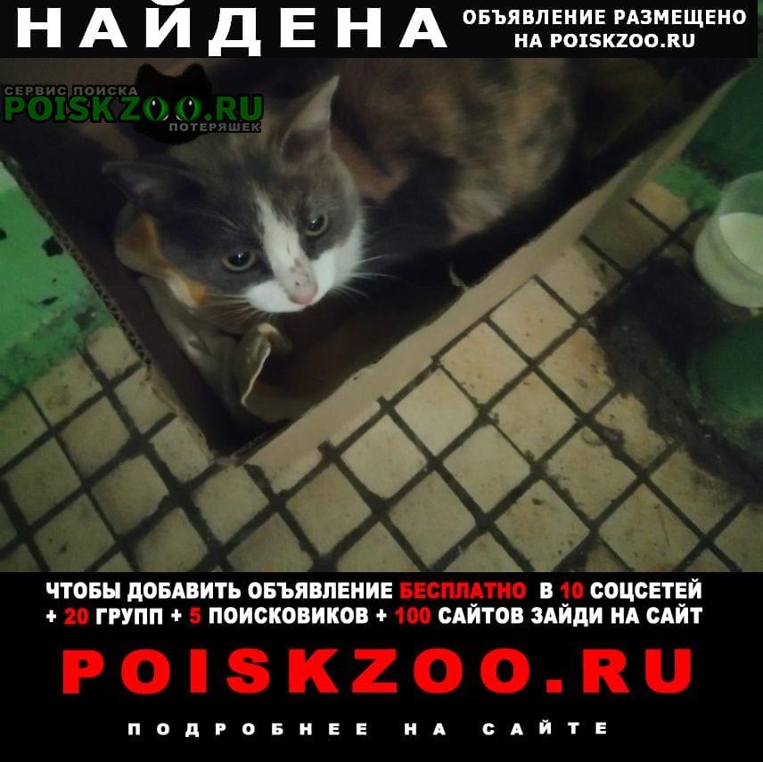 Найдена кошка отзовитесь, кто потерял Набережные Челны