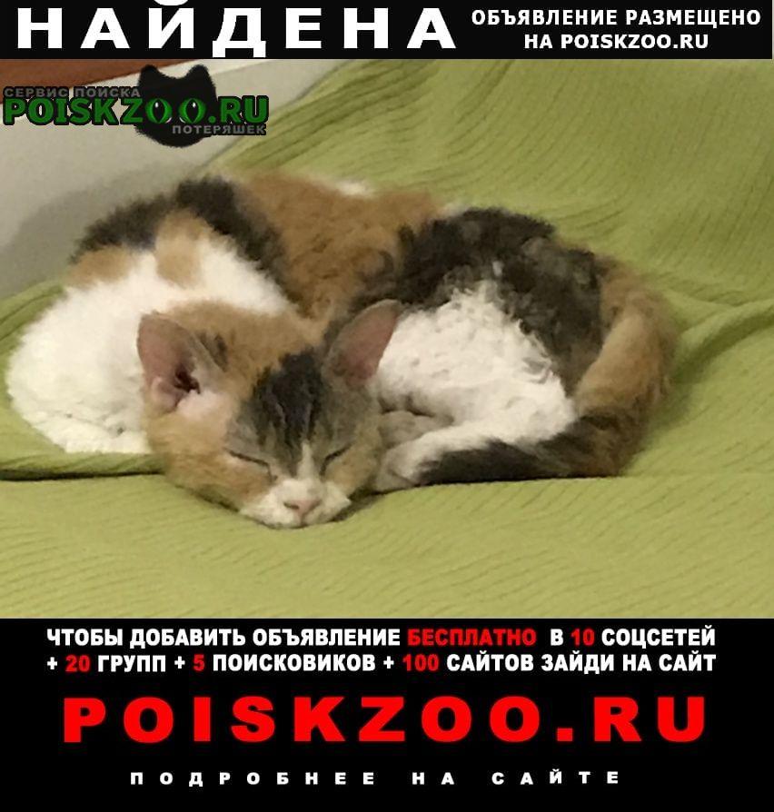Найдена кошка молодая, трехцветная Москва