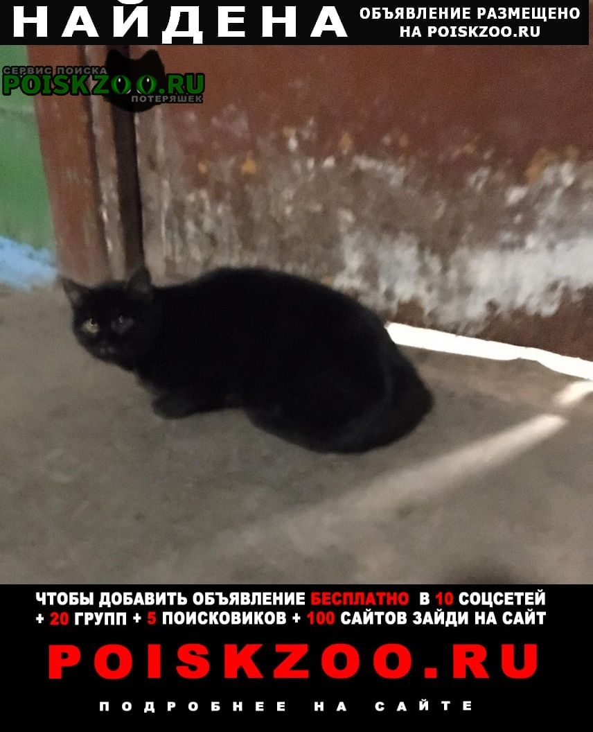 Найдена кошка черный цвет ул панина 23 Ярославль