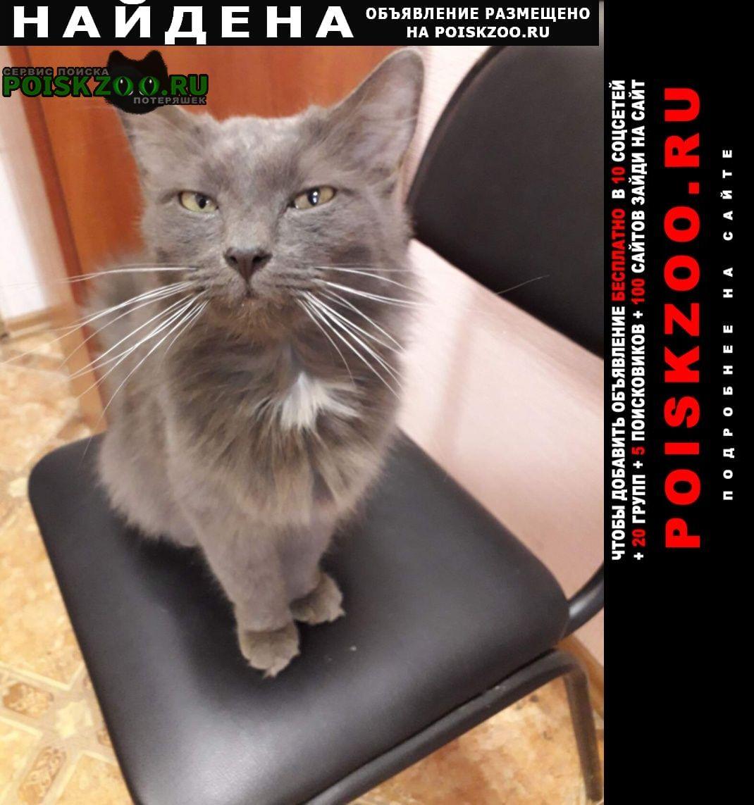 Найдена кошка Кондрово
