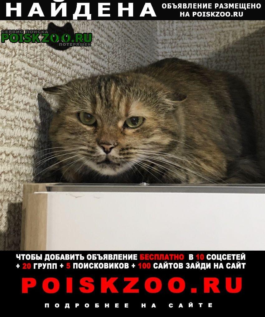 Найдена кошка кот (или ) в новой адыгее Майкоп (Адыгея)