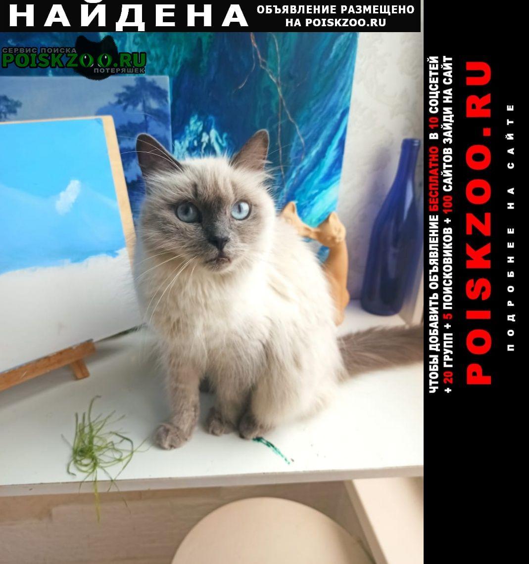 Найдена кошка кошечка невская маскарадная Краснодар
