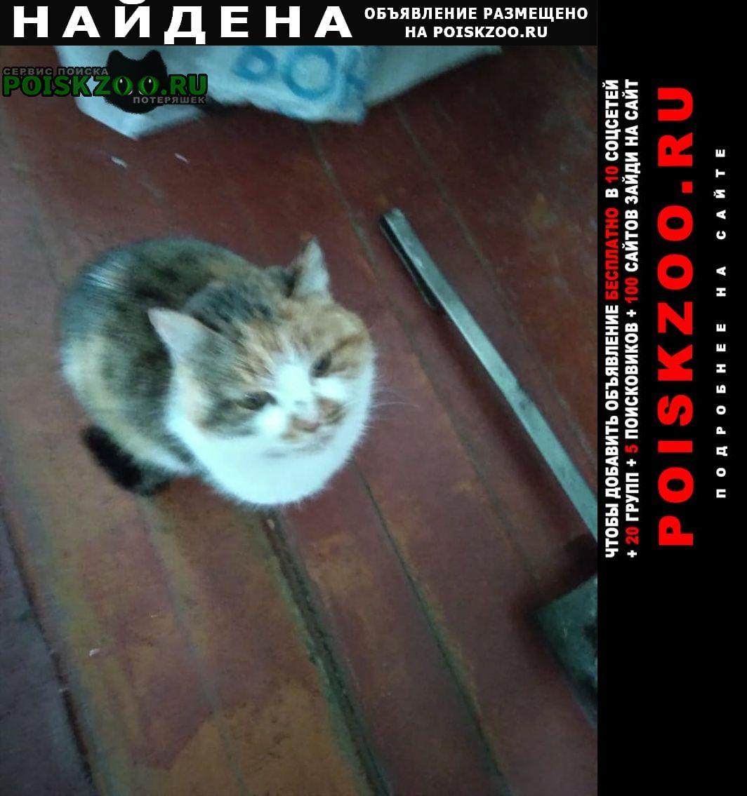 Найдена кошка в мурино Байкальск
