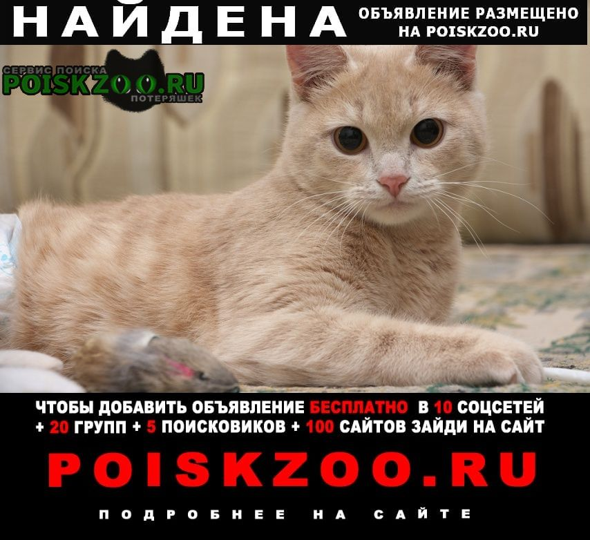 Найден кот персиковый Ростов-на-Дону