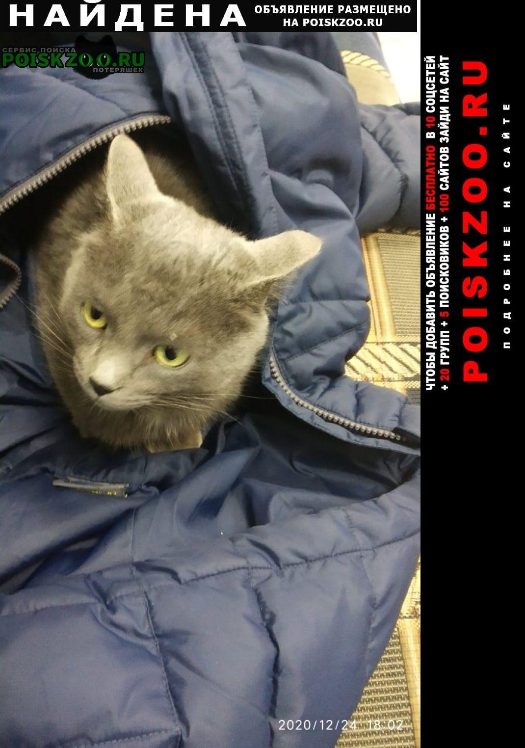 Найден кот серый с ошейником Уфа