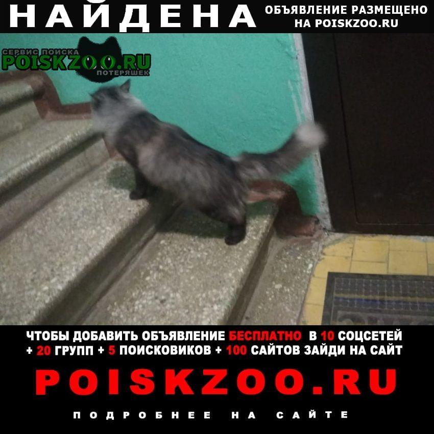 Найдена кошка домашняя живёт третий день в подъе Лыткарино