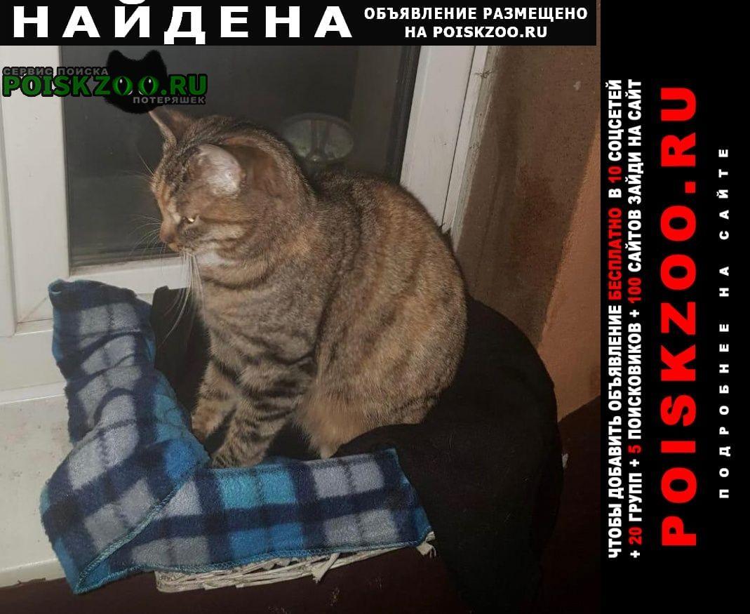 Найдена кошка ласковому котику нужен хозяин Москва