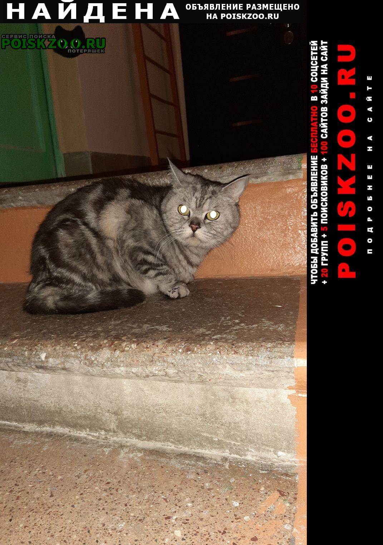 Найдена кошка шотландский кастрированный кот  Москва
